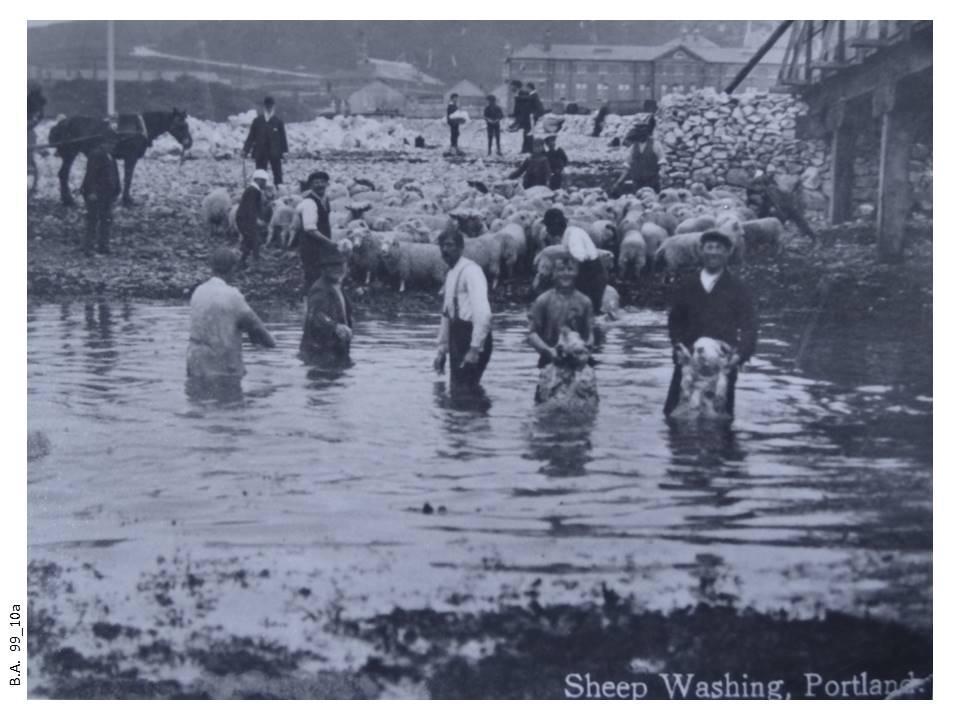 99_10a-Sheep_washing