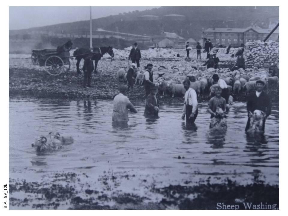 99_10b-Sheep_washing