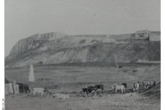 19_29-Cattle_grazing_on_Verne_Common-c1900