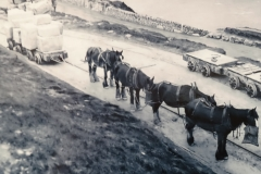 Horse&Wagon-01